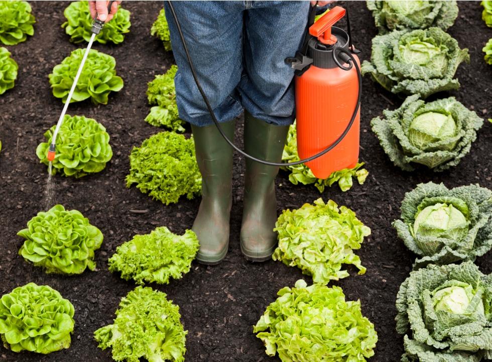 Câmara dos Deputados realiza seminário sobre redução de agrotóxicos