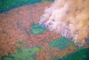 ONGs preveem onda de ações na Justiça contra Bolsonaro por queimadas